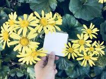 L'homme tient un livre blanc vide carré avec la belle fleur jaune de marguerite de fleur Photographie stock