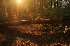 L'horizontal d'automne de montagne avec la forêt colorée images libres de droits