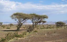 L'horizontal de désert Photographie stock