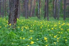 L'horizontal de forêt de source photos libres de droits