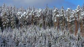 L'horizontal de l'hiver avec la neige a couvert la forêt clips vidéos