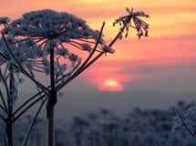 L'horizontal de l'hiver photos libres de droits