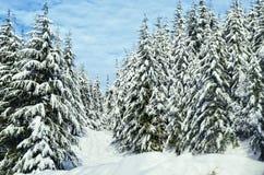 L'horizontal de l'hiver avec la neige a couvert des arbres Photos libres de droits