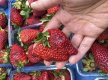 L'hormone de participation de main a injecté la fraise image stock