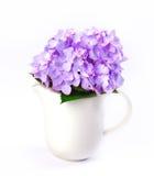 L'hortensia bleu doux fleurit dans le vase blanc sur un fond blanc Photos libres de droits