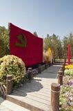 L'horticulture des chrysanthèmes Photos libres de droits