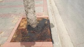 L'huile à moteur utilisée a été versée autour du pied de l'arbre banque de vidéos