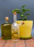 L'huile d'olive de deux bouteilles en verre se tient près d'une fleur sur un fond foncé Images libres de droits