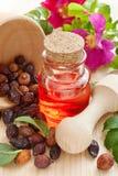 L'huile essentielle dans la bouteille en verre, les baies sèches de cynorrhodon et s'est levée h Photographie stock libre de droits