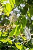L'iguane les prennent un bain de soleil Photo stock