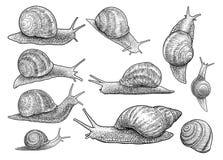 L'illustration d'escargot de jardin, dessin, gravure, encre, schéma, vectorGarden l'illustration d'escargot, dessin, gravure, enc illustration de vecteur