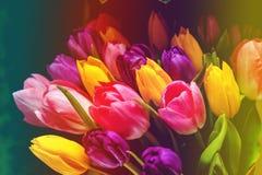 l'illustration de couleur de bouquet simulent l'eau de vecteur de tulipes Photo stock