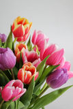 l'illustration de couleur de bouquet simulent l'eau de vecteur de tulipes Photo libre de droits