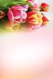 l'illustration de couleur de bouquet simulent l'eau de vecteur de tulipes Image libre de droits