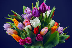 l'illustration de couleur de bouquet simulent l'eau de vecteur de tulipes photos libres de droits