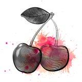 L'illustration de gravure de vecteur des paires de cerises avec l'aquarelle rose éclabousse illustration stock