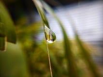 L'illustration entière de baisse de l'eau? décrivent dans le coffre-fort nos arbres dans le monde Photos stock
