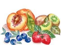 L'illustration tirée par la main d'aquarelle porte des fruits sur le backgroun blanc illustration stock