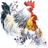 l'illustrazione del pollo e del gallo con l'acquerello della spruzzata ha strutturato il fondo illustrazione di stock