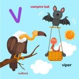 L'illustrazione ha isolato il pipistrello del V-vampiro della lettera dell'alfabeto, vipera, avvoltoio illustrazione vettoriale