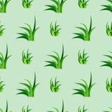 L'illustrazione senza cuciture di vettore del modello di progettazione della natura dell'erba verde coltiva il fondo della natura Fotografie Stock