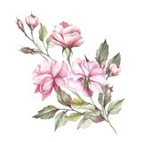 L'image d'une rose Illustration d'aquarelle d'aspiration de main Photographie stock