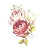 L'image d'une rose Illustration d'aquarelle d'aspiration de main Image stock