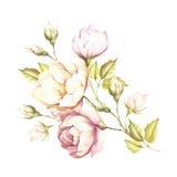 L'image d'une rose Illustration d'aquarelle d'aspiration de main Photos stock