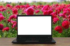 L'image de l'extérieur avec l'ordinateur portable ouvert et vident l'écran blanc pour l'espace de copie Photographie stock