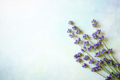 L'image de la belle lavande fleurit la frontière, le fond floral pourpre, bouquet de floraison décoratif de l'usine violette dess Image libre de droits