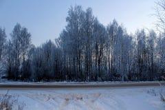 L'image des arbres et des arbustes couverts de gel en hiver, temps givré et clair grande illustration de faune photos libres de droits