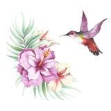 L'image des fleurs, des feuilles et des colibris tropicaux Illustration d'aquarelle Photo libre de droits