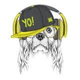 L'image du cocker dans les verres, écouteurs et dans le chapeau de hip-hop Illustration de vecteur Photo libre de droits