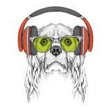 L'image du cocker dans les verres, écouteurs et dans le chapeau de hip-hop Illustration de vecteur Photos stock