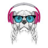 L'image du cocker dans les verres, écouteurs et dans le chapeau de hip-hop Illustration de vecteur Photo stock