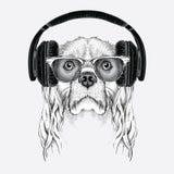 L'image du cocker dans les verres, écouteurs et dans le chapeau de hip-hop Illustration de vecteur Images libres de droits