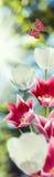 L'image fleurit des tulipes et des papillons Photo libre de droits