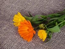 L'image foncée avec l'humeur d'automne Image stock