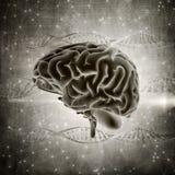 l'image grunge de cerveau du style 3D sur une ADN échoue le fond Photo libre de droits