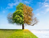 Un albero di quattro stagioni Fotografia Stock Libera da Diritti