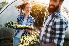 L'immagine delle coppie della piantina degli agricoltori germoglia in giardino Immagini Stock Libere da Diritti