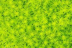 L'immagine di erba ha riguardato il fondo del pavimento/strutture, pianta verde w Fotografie Stock