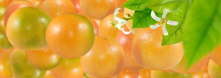 L'immagine di molte arance mature deliziose si chiude su immagine stock