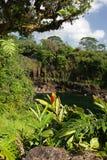 L'immagine di riserva dell'arcobaleno cade, grande Isalnd, Hawai Fotografie Stock Libere da Diritti