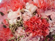 L'immagine di sfondo dei fiori variopinti Immagine Stock