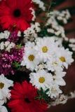 L'immagine di sfondo dei fiori variopinti Immagini Stock Libere da Diritti