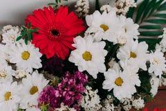 L'immagine di sfondo dei fiori variopinti Fotografia Stock Libera da Diritti
