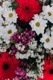 L'immagine di sfondo dei fiori variopinti Fotografia Stock