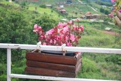 L'immagine di un canestro del balcone del metallo ha riempito di fiori piantati fotografia stock