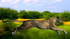 L'immagine di un gepard Immagini Stock Libere da Diritti